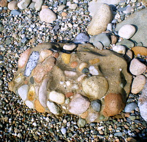 C onglomerate Beach Rock 1
