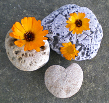 Beach Rocks Inspiration